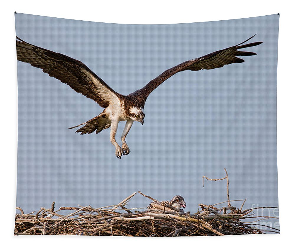 Osprey Tapestry featuring the photograph Osprey Returning To Nest by Jerry Fornarotto