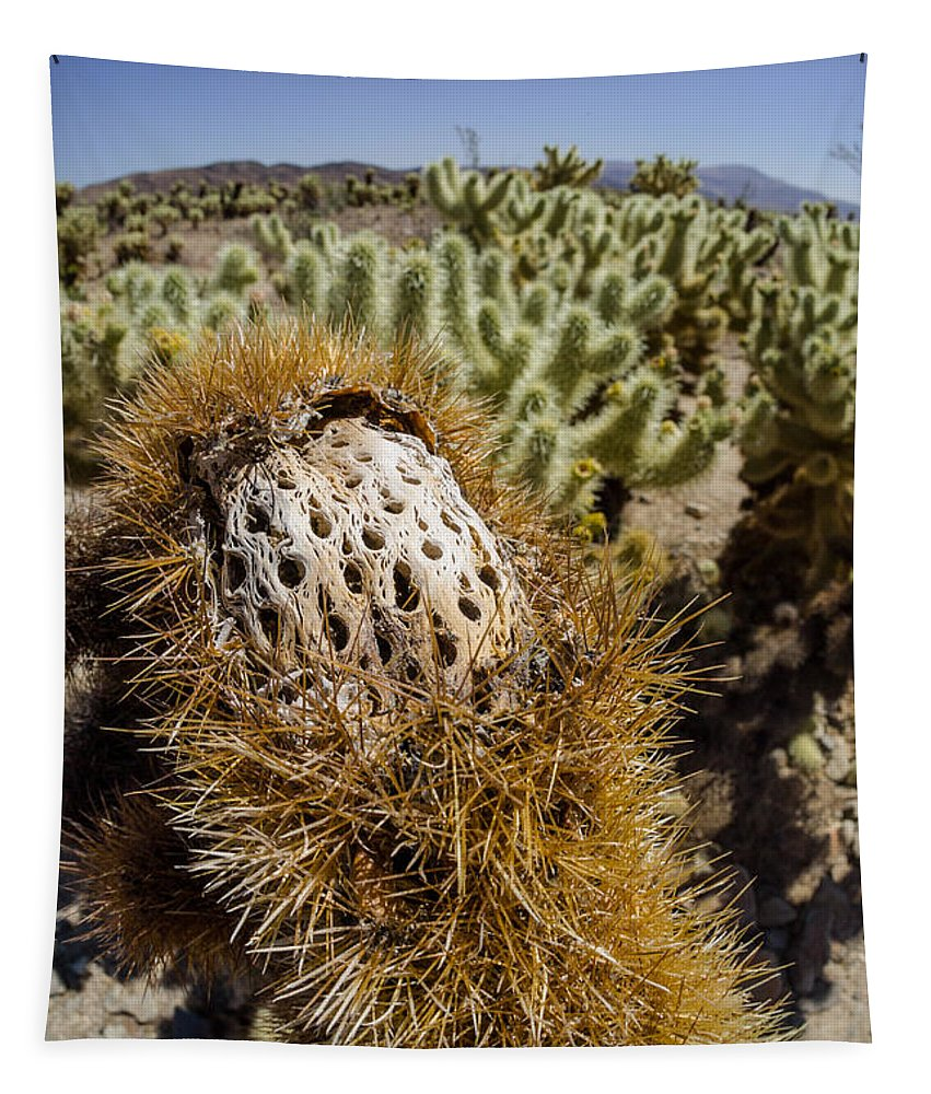 Cactus Tapestry featuring the photograph Ouch by Scott Campbell