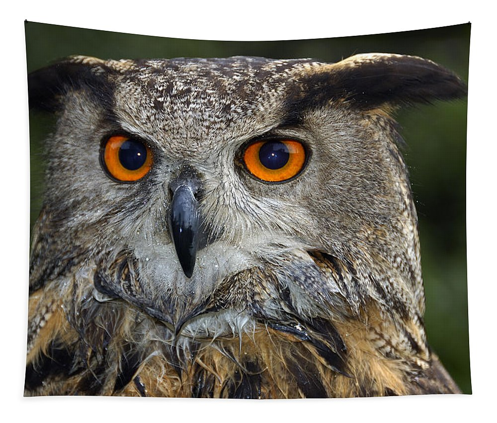 Owl Tapestry featuring the photograph Owl Bubo Bubo Portrait by Matthias Hauser