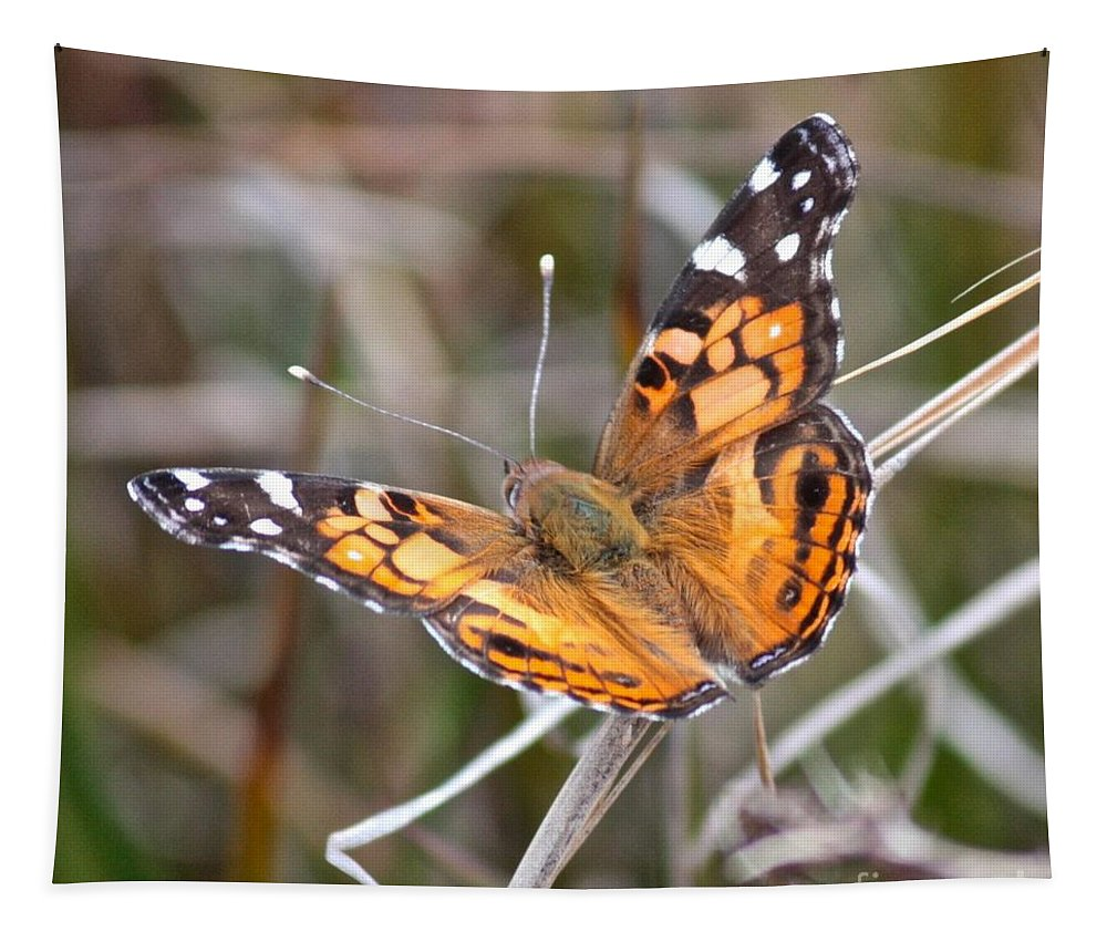 Butterfly Tapestry featuring the photograph Painted Lady Square by Carol Groenen