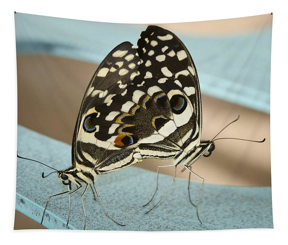 Black And White Butterfly Tapestry featuring the photograph Pair Of Citrus Swallowtail Butterflies by Saija Lehtonen