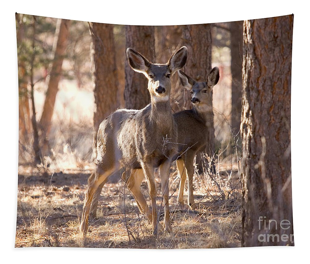 Colorado Tapestry featuring the photograph Pair Of Does by Steve Krull