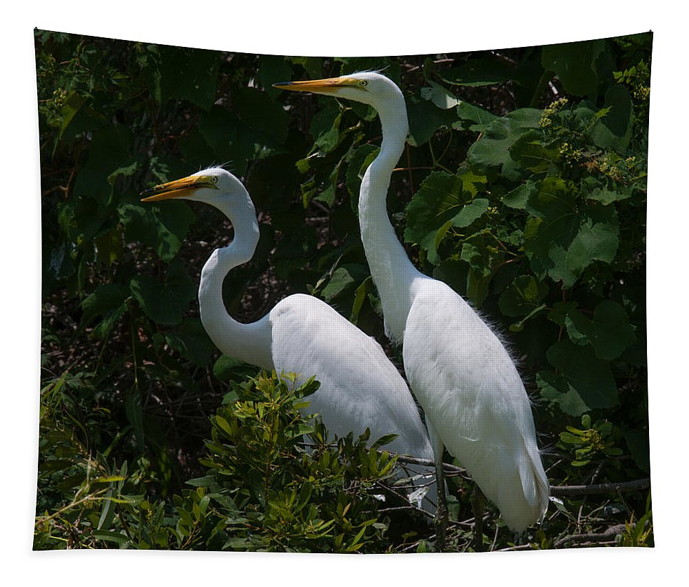 Egret Tapestry featuring the photograph Pair Of Herons by Dale Powell