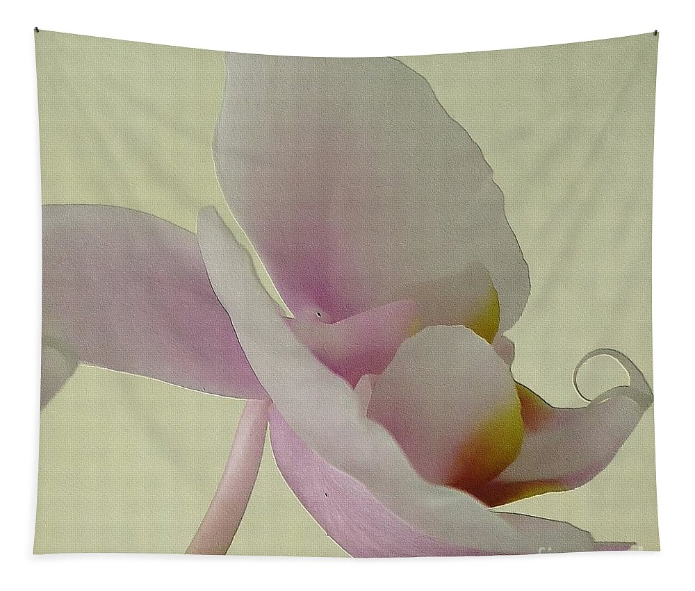 Flower Tapestry featuring the photograph Pale Orchid On Cream by Barbie Corbett-Newmin