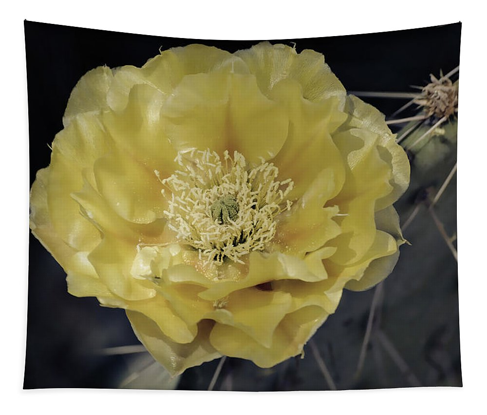 Prickly Pear Cactus Tapestry featuring the photograph Pale Yellow Prickly Pear Bloom by Saija Lehtonen