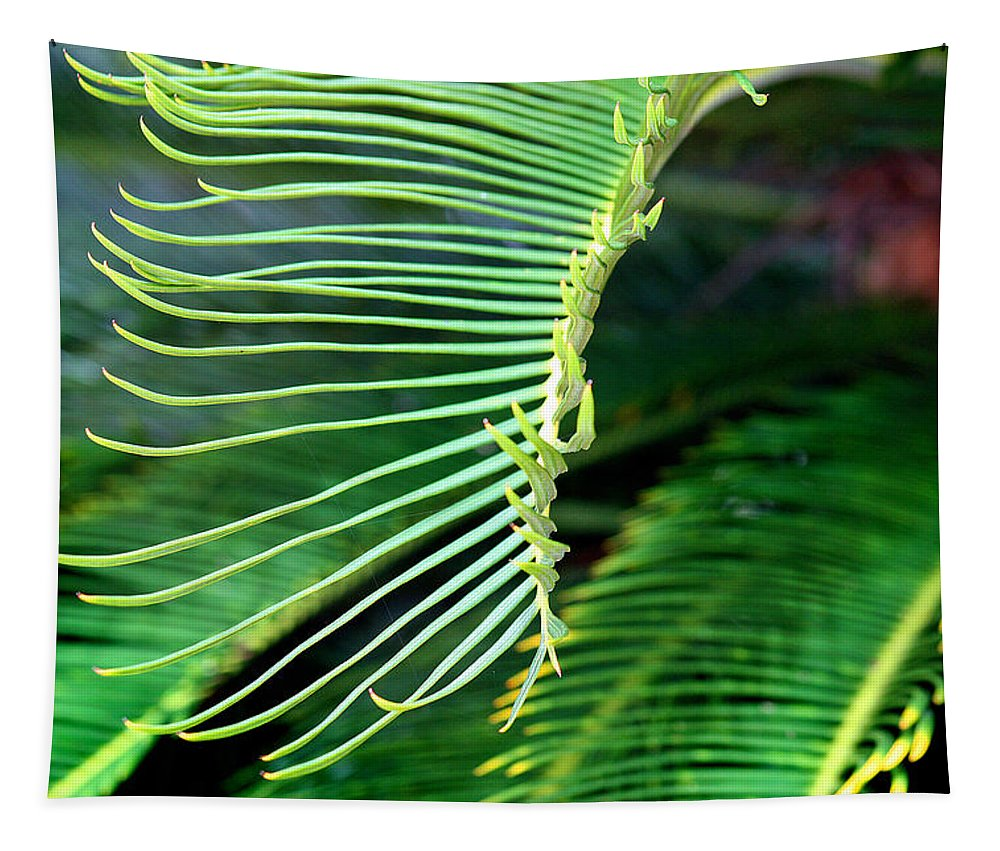 Tapestry featuring the photograph Palme Cycas by Karen Adams