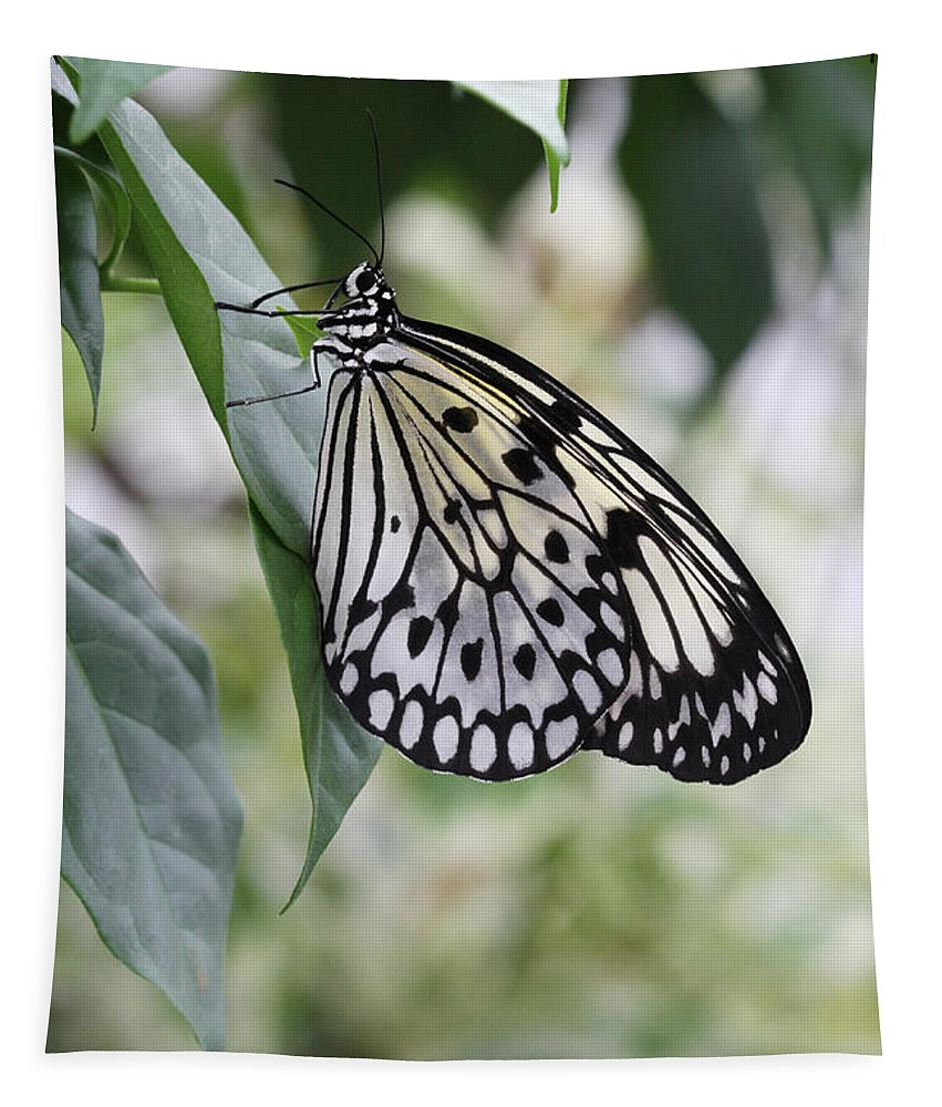Butterfly Tapestry featuring the photograph Paper Kite Butterfly by Judy Whitton