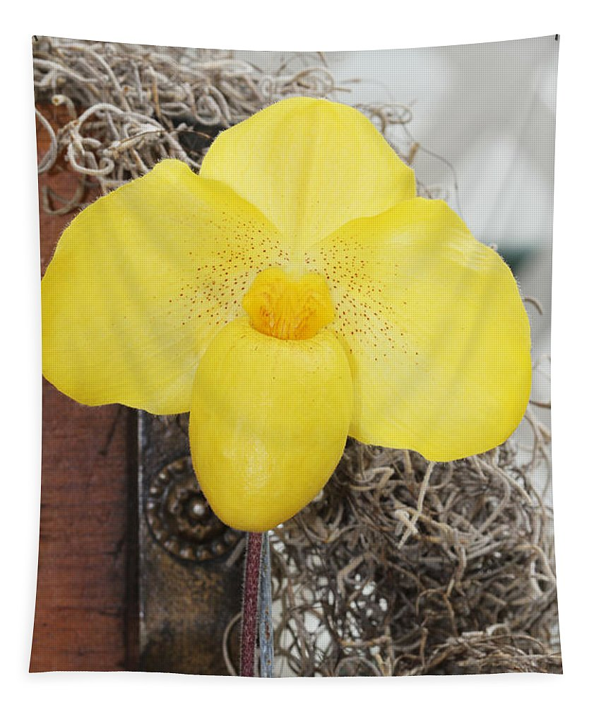 Orchid Tapestry featuring the photograph Paphiopedilum Fumis Gold by Judy Whitton