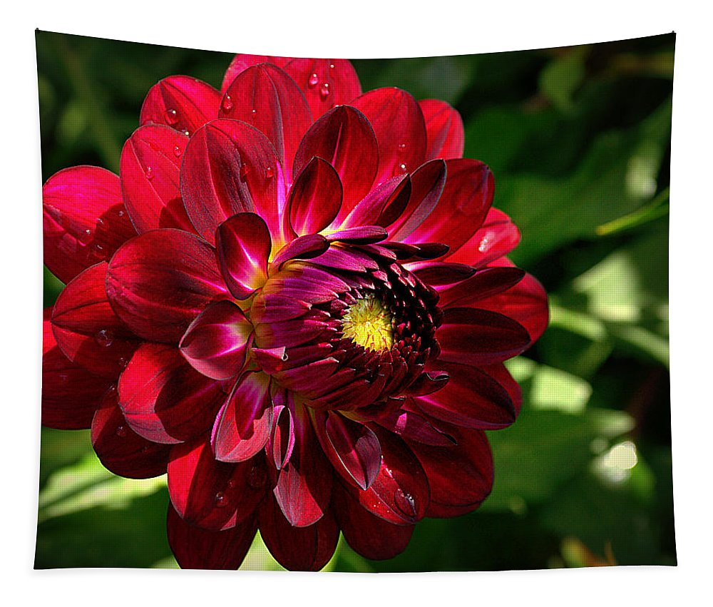 Red Tapestry featuring the photograph Passionate Dahlia by Tikvah's Hope