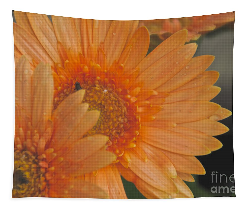 Peach Daisy Tapestry featuring the photograph Peach Daisy Cluster by William Norton
