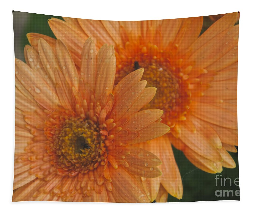 Peach Daisy Tapestry featuring the photograph Peach Daisy by William Norton