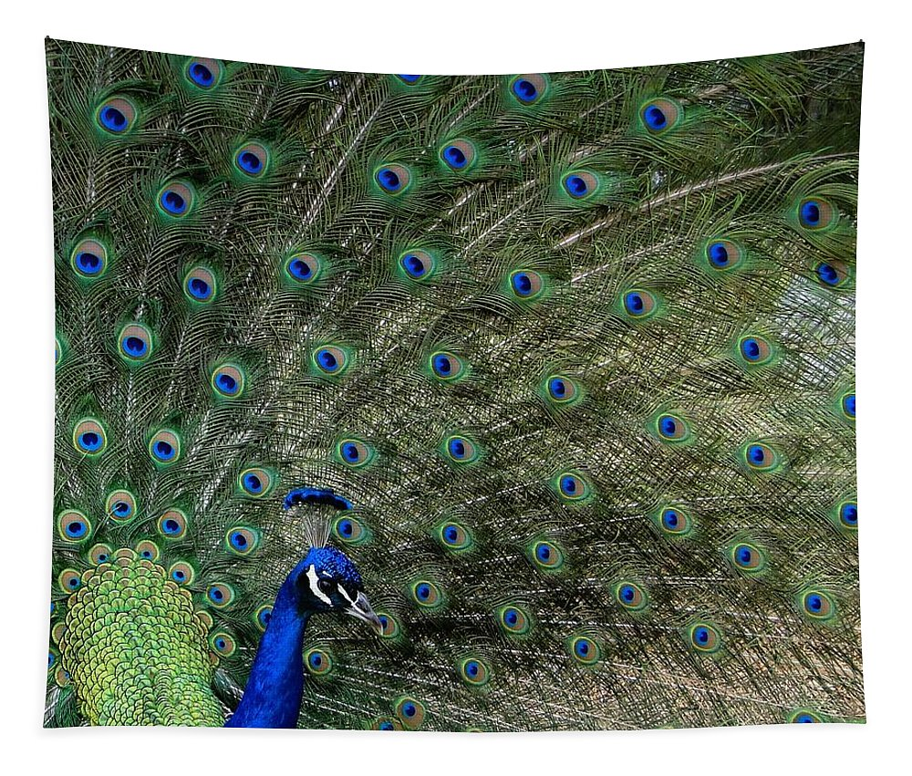 Peacock Tapestry featuring the photograph Peacock 8 by Ben Yassa