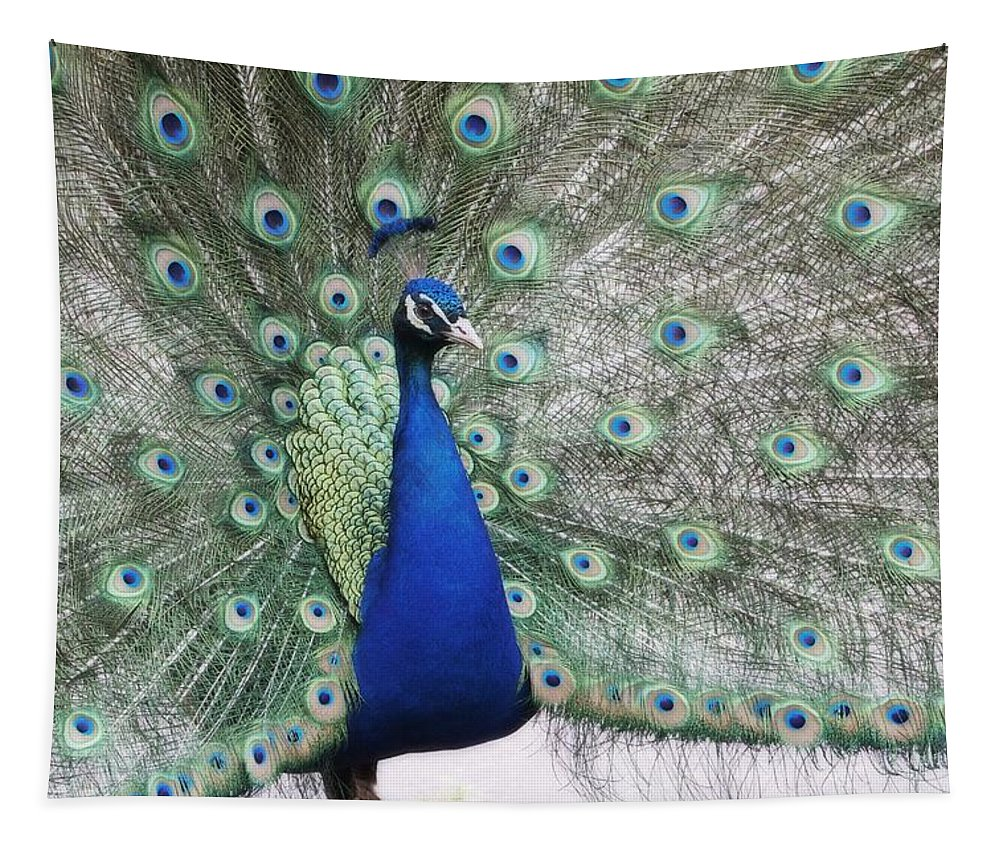 Peacock Tapestry featuring the photograph Peacock Fanning by Alice Gipson