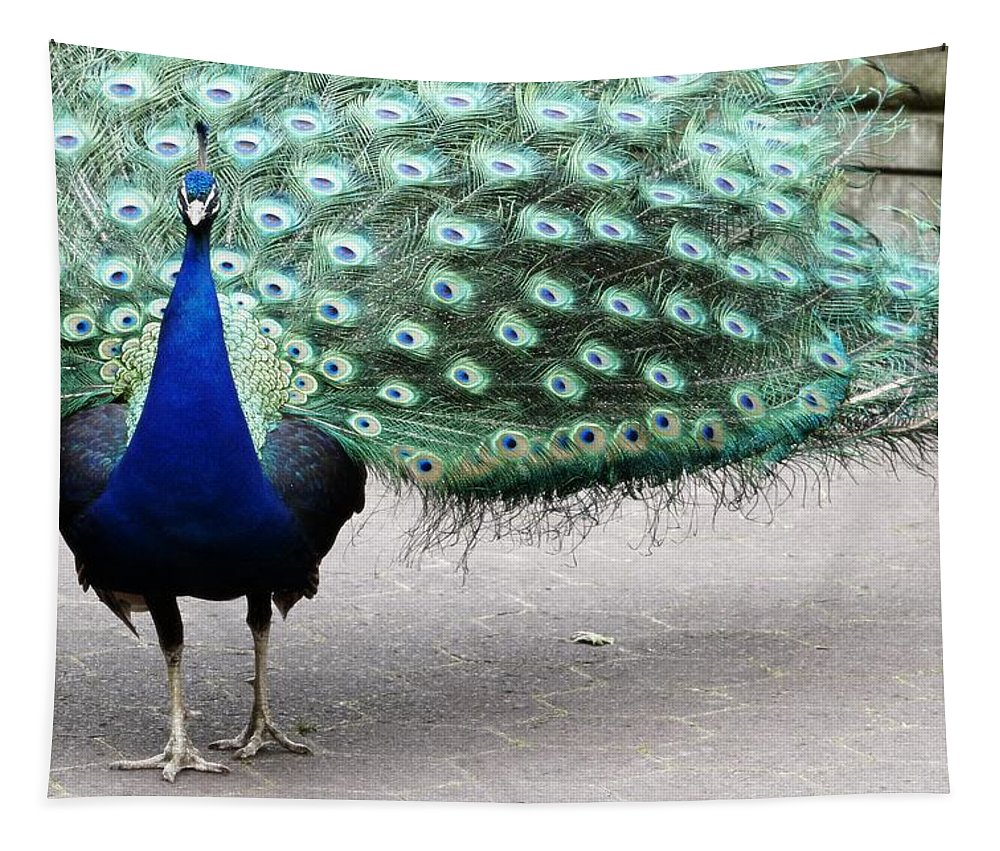 Peacock Tapestry featuring the photograph Peacock Strut by Alice Gipson