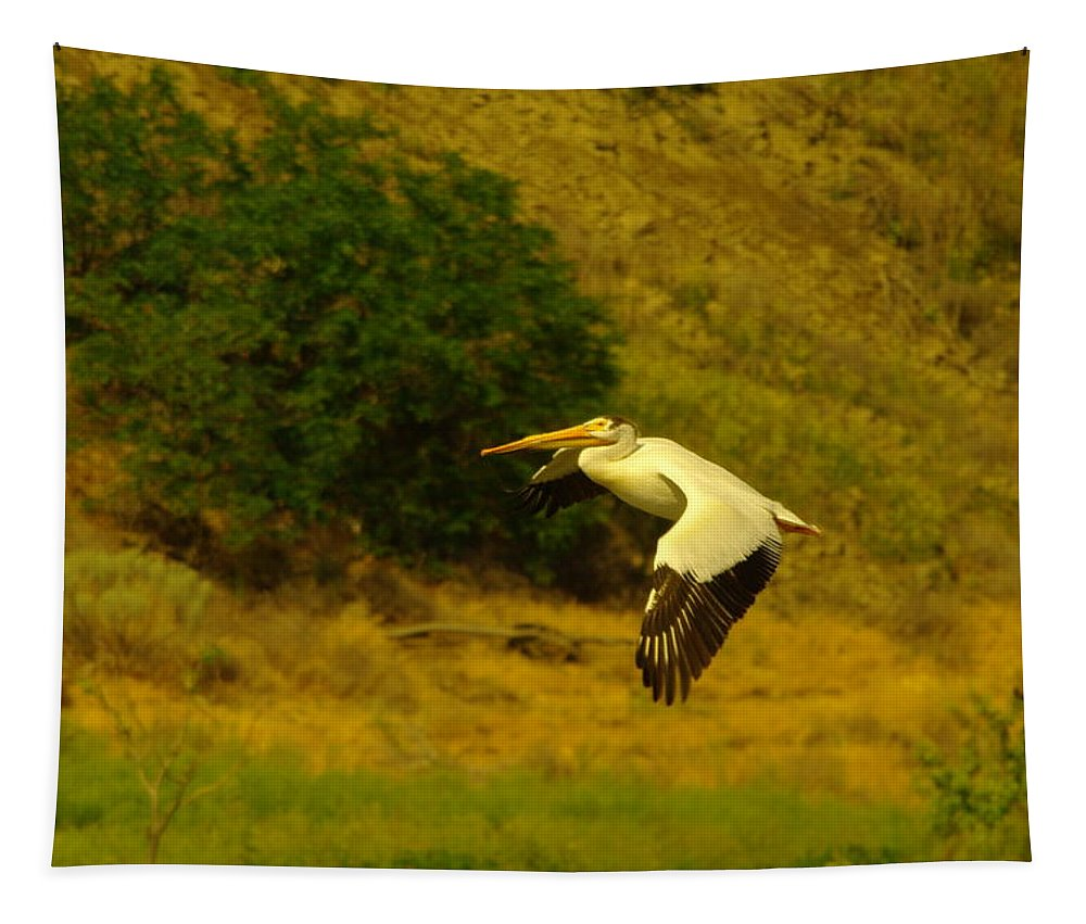 Birds Tapestry featuring the photograph Pelican Buzz By by Jeff Swan