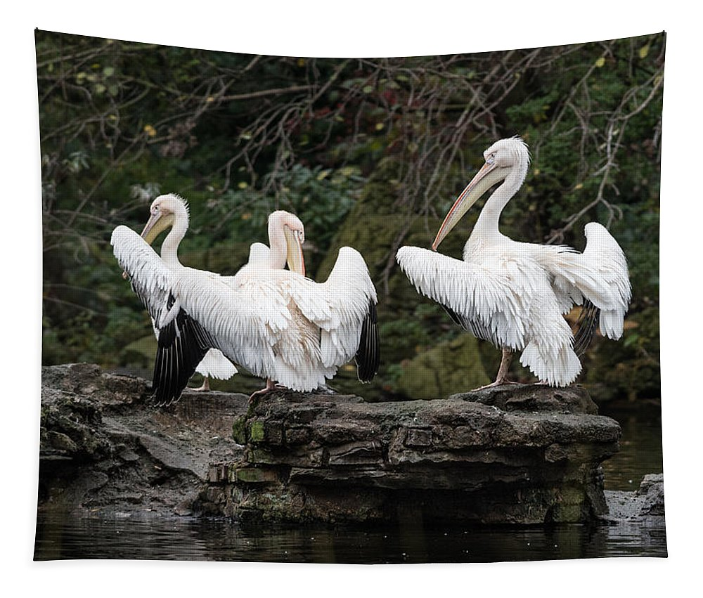 London Tapestry featuring the photograph Pelicans by Matt Malloy