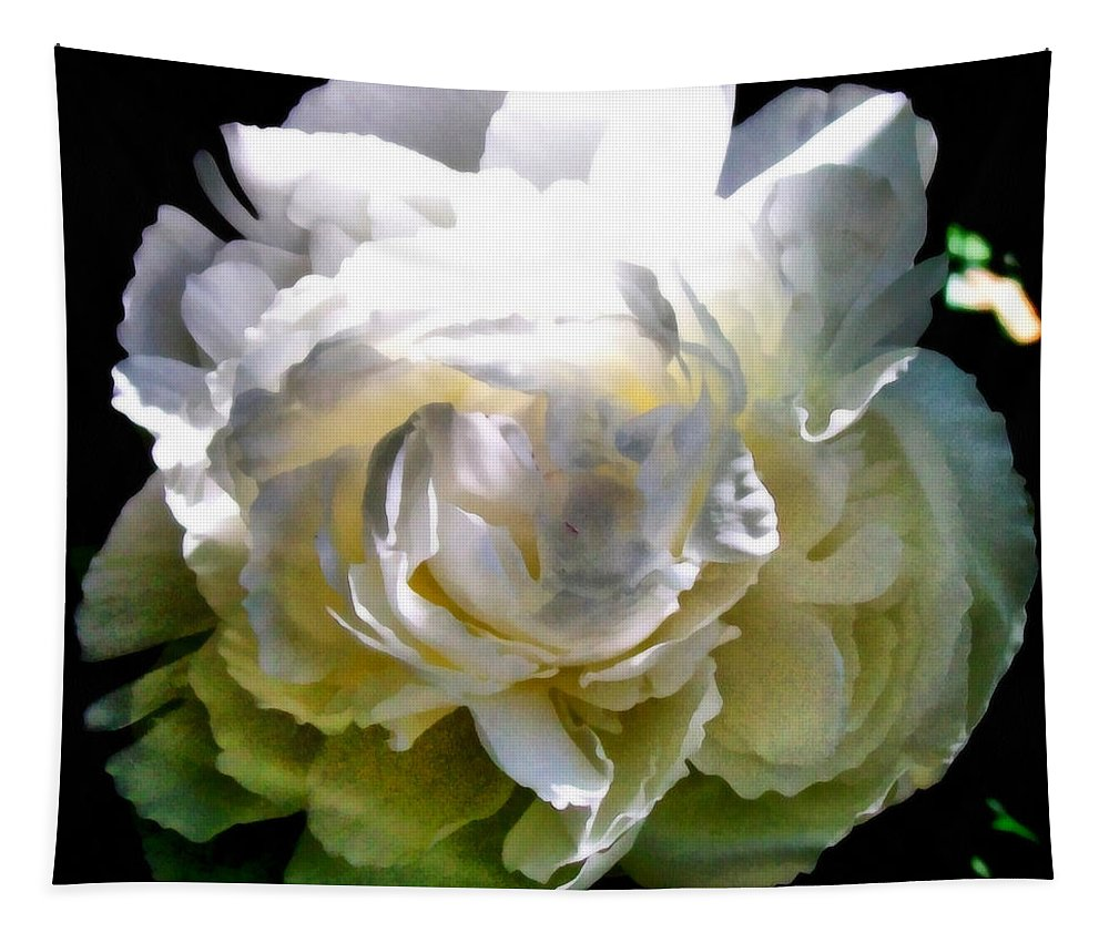 White Peony Tapestry featuring the photograph Peony in Morning Sun by Michelle Calkins