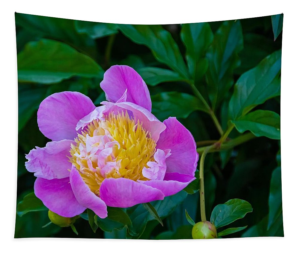 Bolton Tapestry featuring the photograph Peony by Steve Harrington