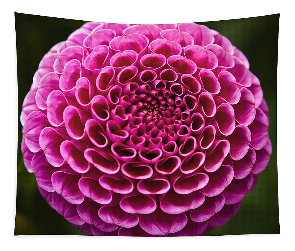 Perfect Pink Orb Tapestry featuring the photograph Perfect Pink Orb by Wes and Dotty Weber