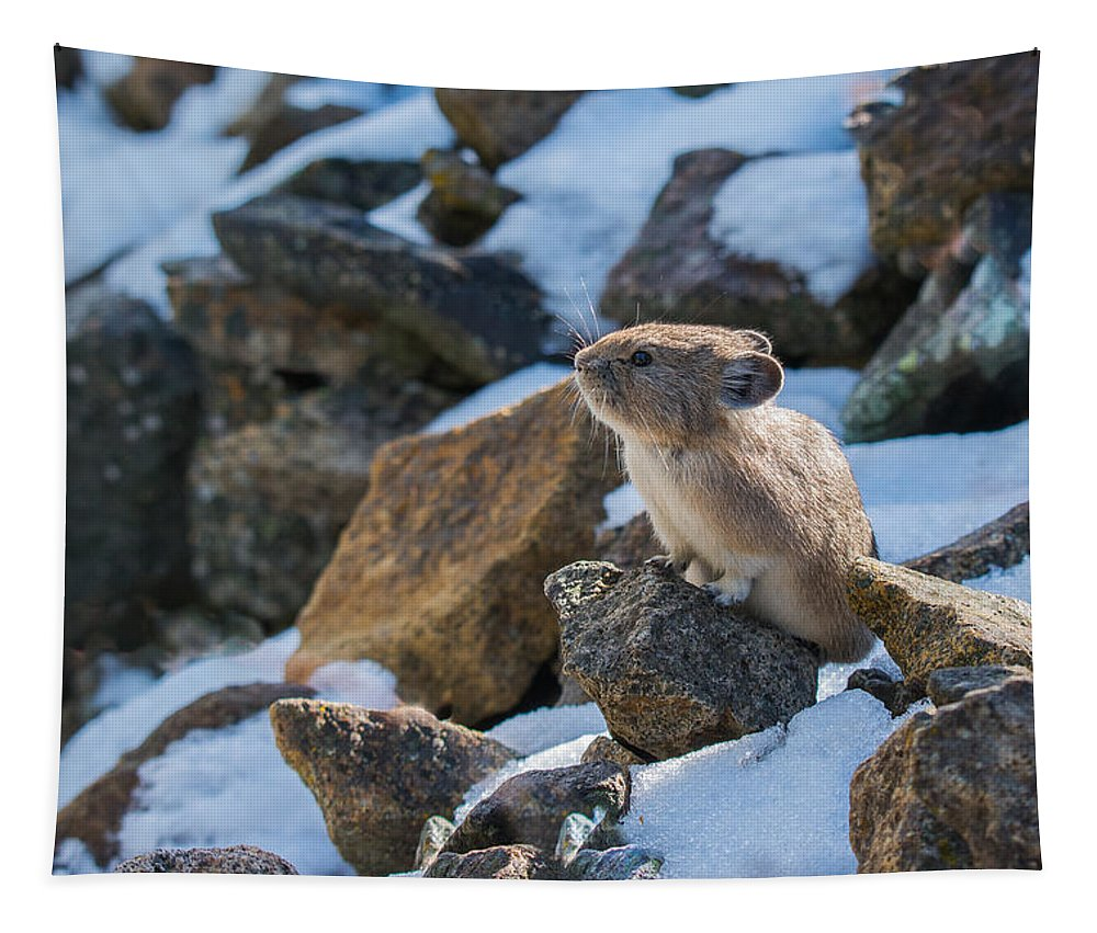 Pika Tapestry featuring the photograph Pika In The Sun by Yeates Photography