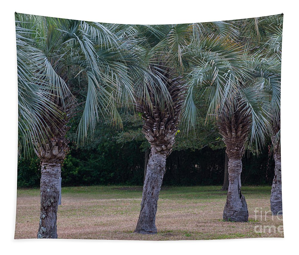 Pindo Palms Tapestry featuring the photograph Pindo Palms by Dale Powell