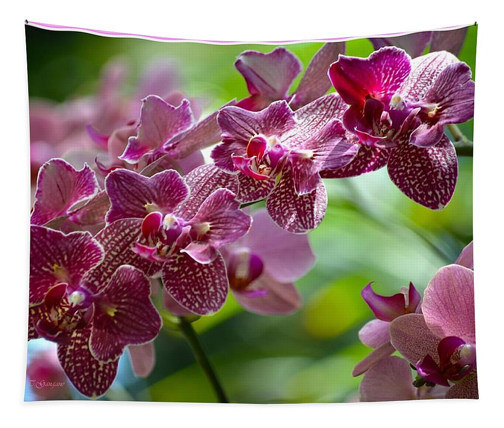 Pink Elegance Tapestry featuring the photograph Pink Elegance by Sonali Gangane