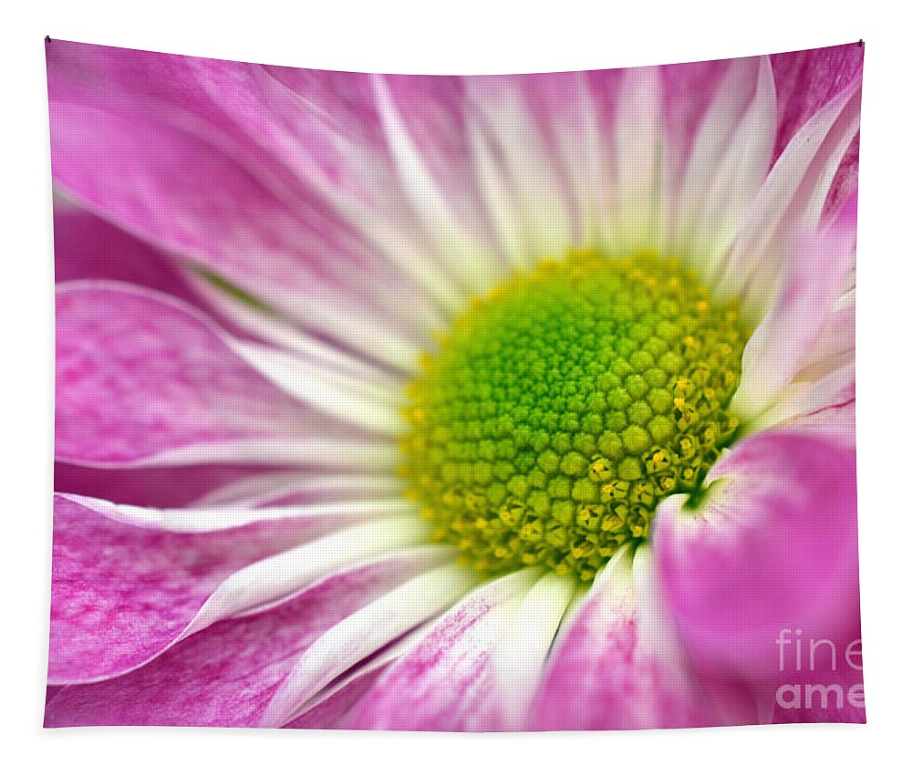 Pink Daisy Tapestry featuring the photograph Pink Hope by Deb Halloran
