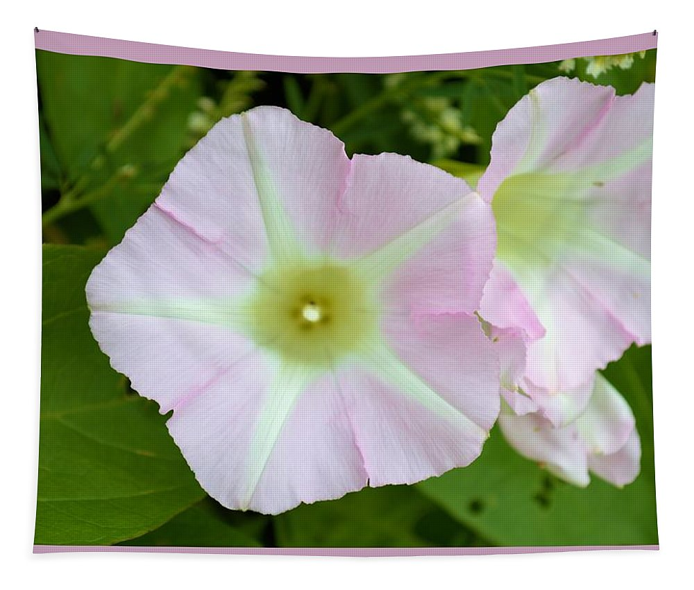 Pink Tapestry featuring the photograph Pink Star 8706 by Bonfire Photography