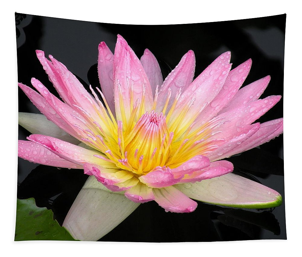 Water Lily Tapestry featuring the photograph Pink Water Lily by Kim Bemis
