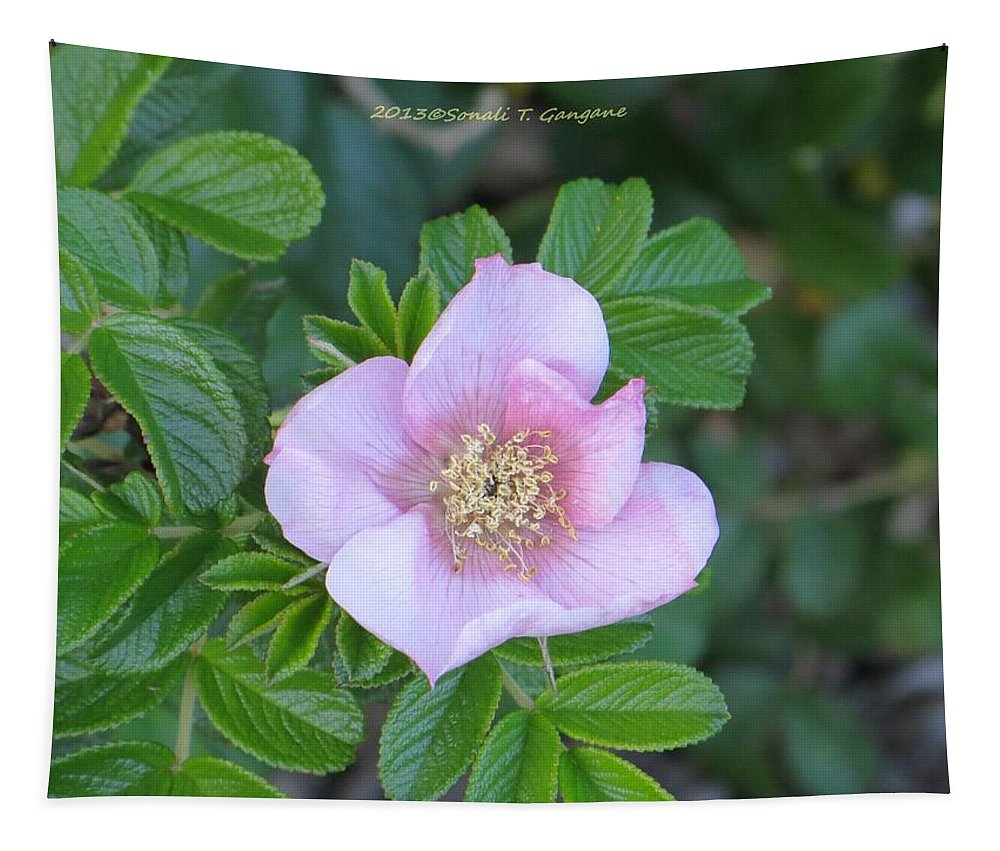 Macro Tapestry featuring the photograph Pleasing Pink by Sonali Gangane
