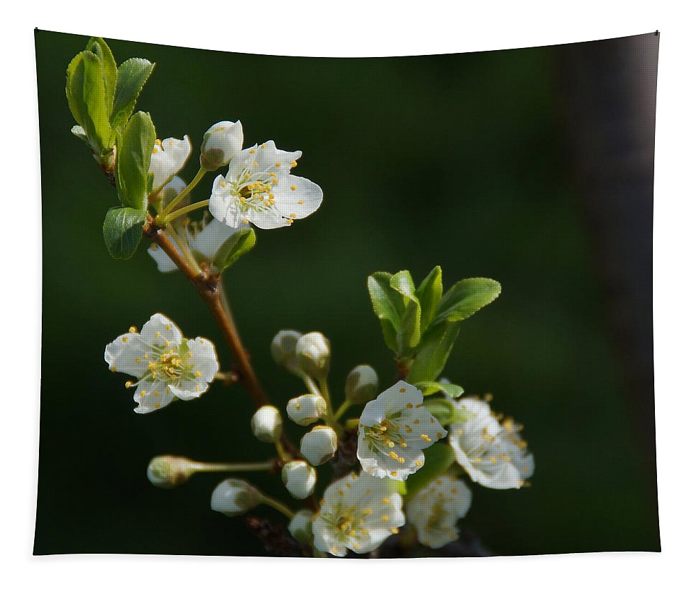 Plum Tapestry featuring the photograph Plum Blossoms by Mick Anderson