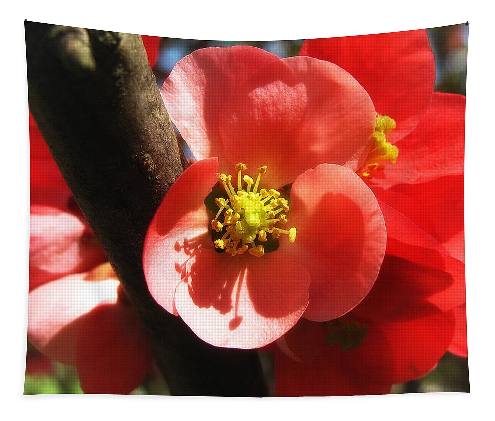 Pink Tapestry featuring the photograph Plum Branch by Mary Lane