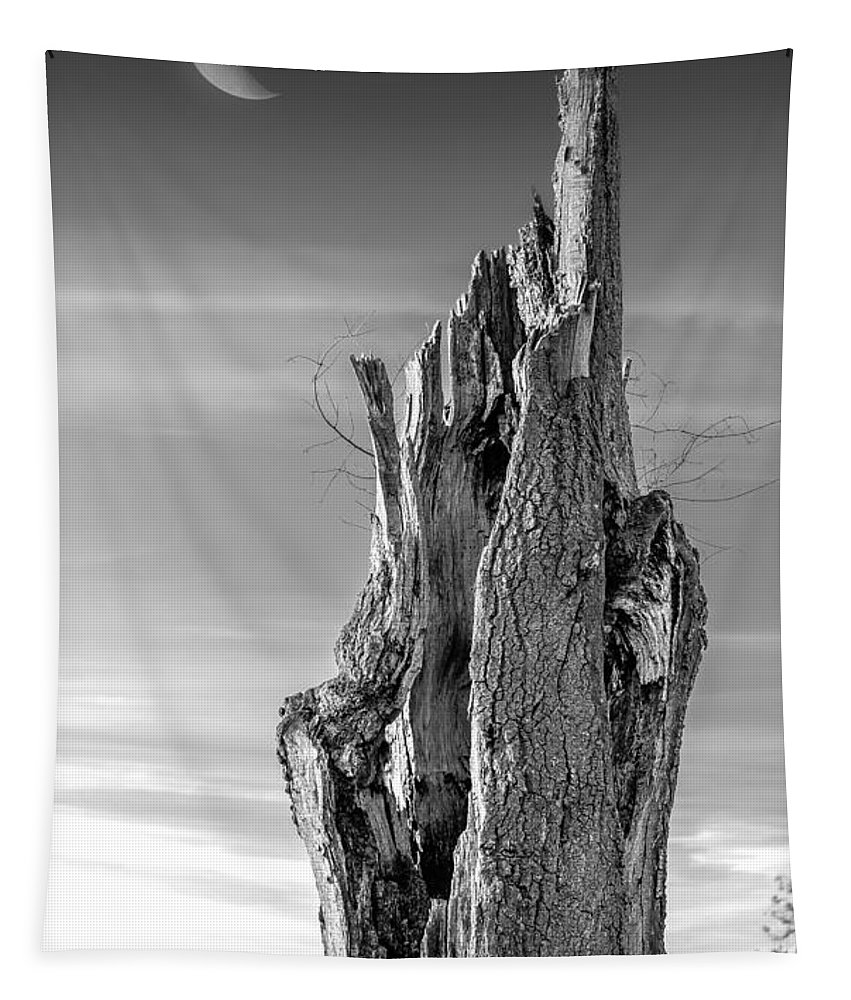 2d Tapestry featuring the photograph Pointing To The Heavens - Bw by Brian Wallace