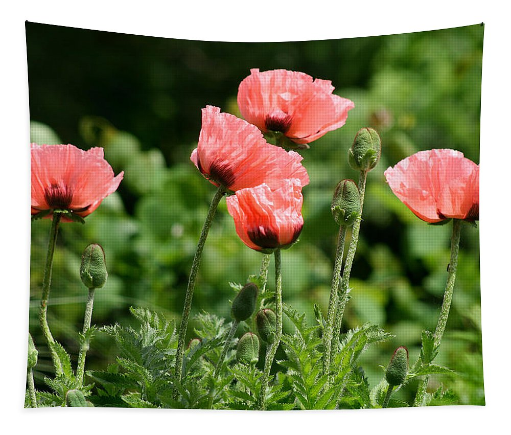 Poppy Tapestry featuring the photograph Poppies In My Garden by Karen Adams