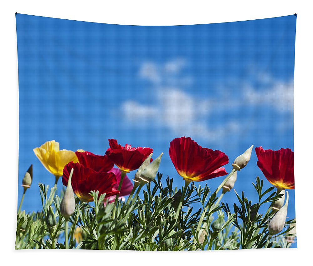 Poppy Tapestry featuring the photograph Poppies by Steve Purnell