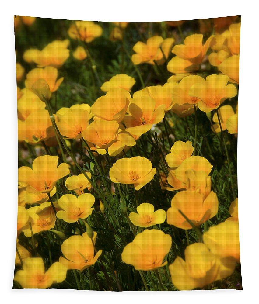 Poppies Tapestry featuring the photograph Poppy Fields by Saija Lehtonen