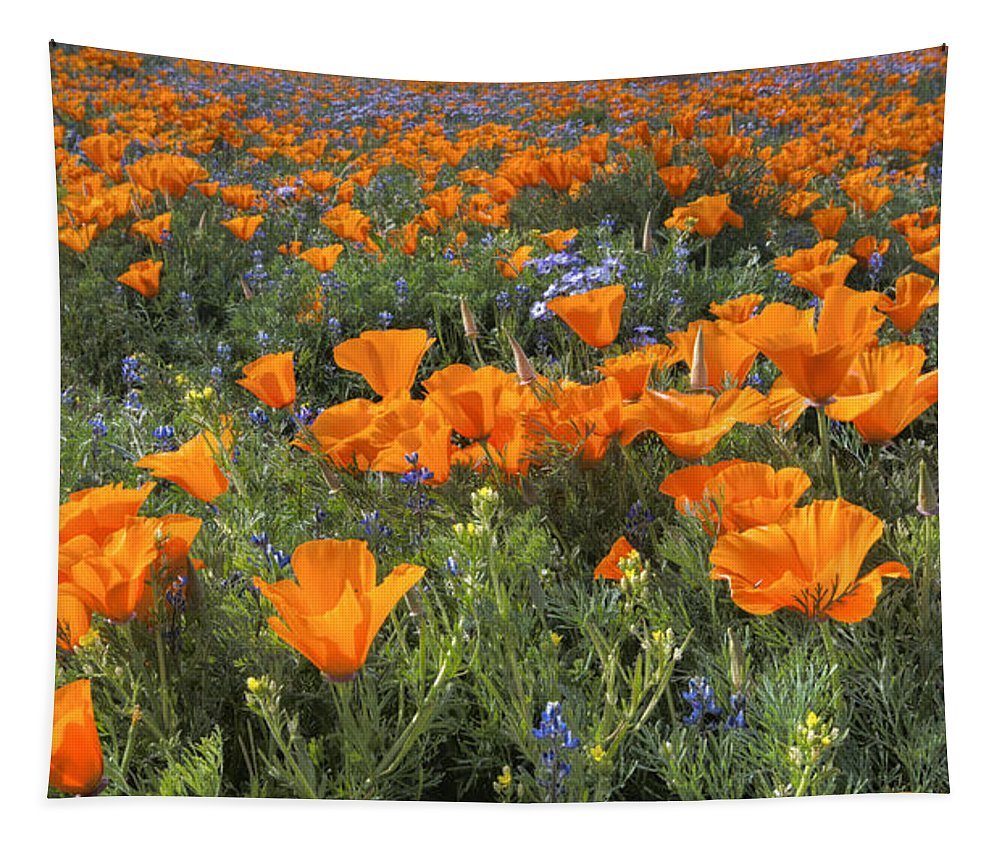 Wildflower Tapestry featuring the photograph Poppy Perfection by Lynn Bauer