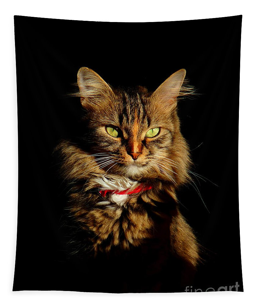 Cat Tapestry featuring the photograph Portrait Of A Tramp Cat- Two Part by Binka Kirova