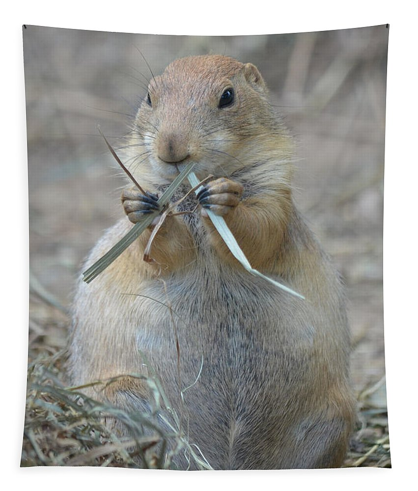 Prairie Tapestry featuring the photograph Prairie Dog Food by Richard Bryce and Family