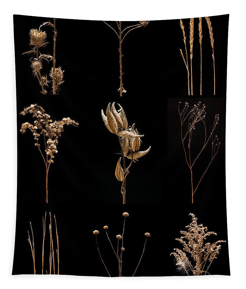 Bluestem Tapestry featuring the photograph Prairie Plant Still Life by Steve Gadomski