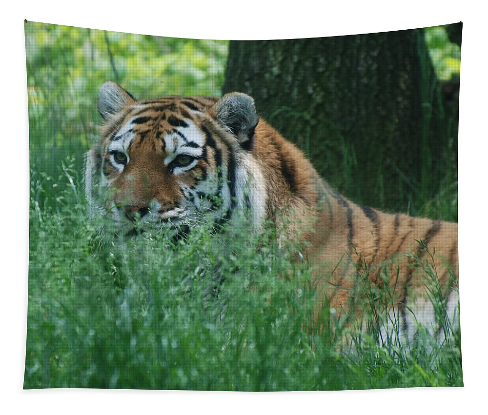 Tiger Tapestry featuring the photograph Predator In The Grass by Richard Bryce and Family