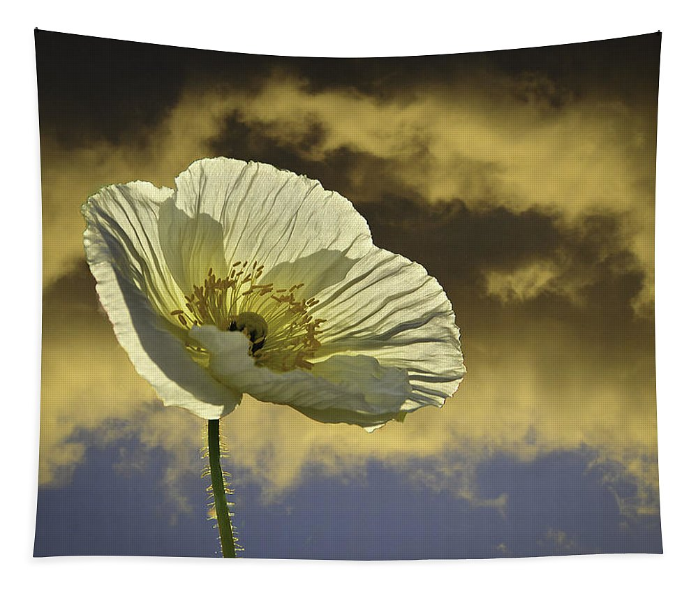 Poppy Tapestry featuring the photograph Prelude To Spring by Lynn Bauer