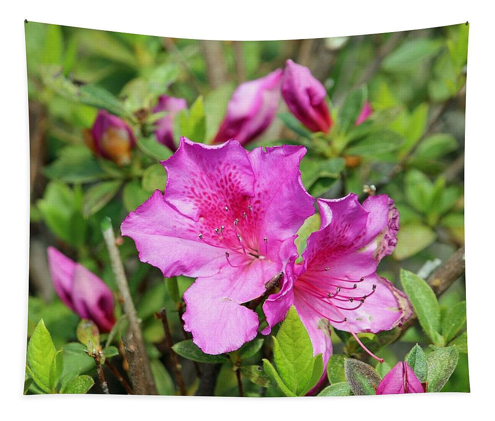 Pink Tapestry featuring the photograph Pretty In Pink by Cynthia Guinn