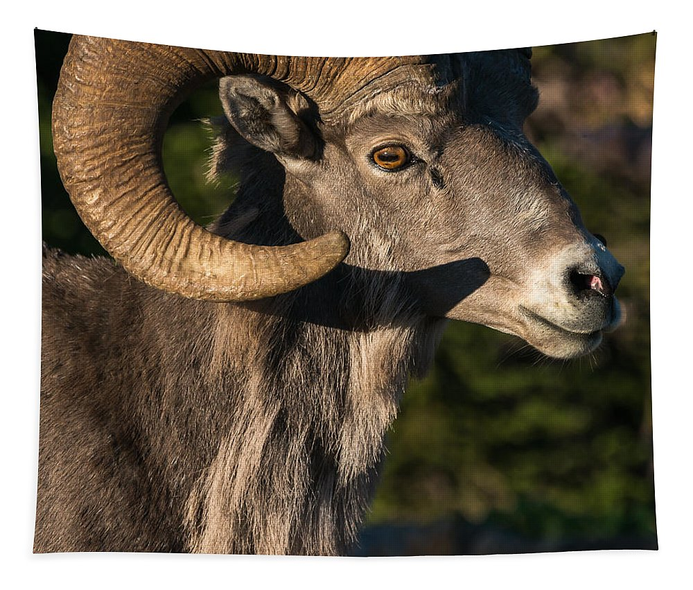 Big-horn Ram Tapestry featuring the photograph Prize Of Glacier by Yeates Photography