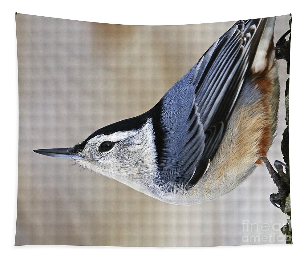 White-breasted Nuthatch Tapestry featuring the photograph Proud Nuthatch... by Nina Stavlund