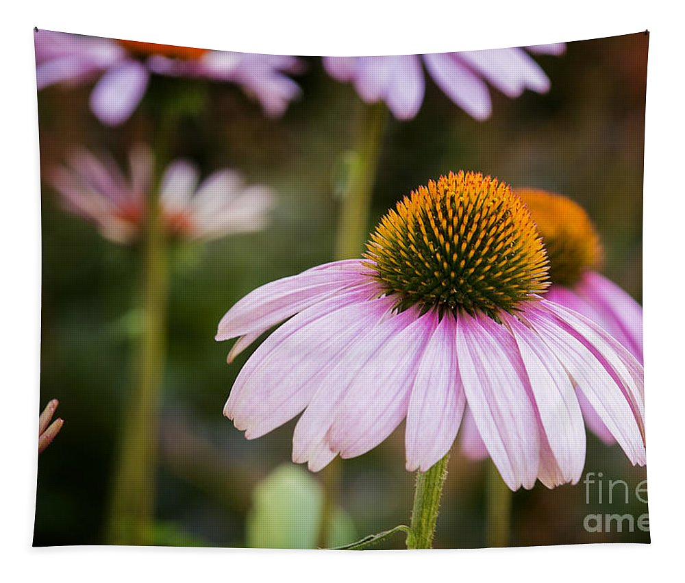 Purple Coneflowers Tapestry featuring the photograph Purple Coneflowers by Michael Shake