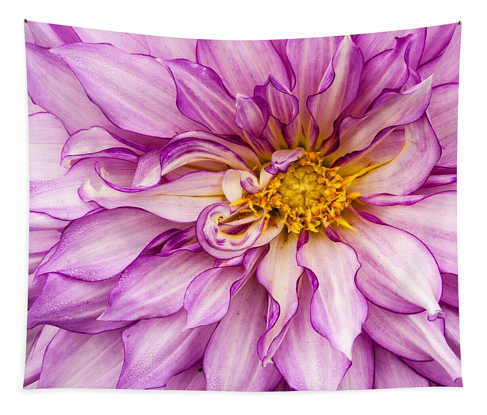 Dahlia Tapestry featuring the photograph Purple Dahlia by Jean Noren