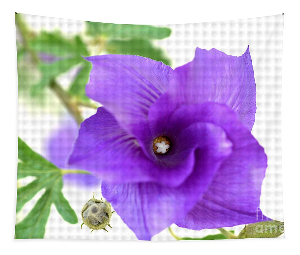 Blue Hibiscus Tapestry featuring the photograph Purple Delicacy by Deb Halloran