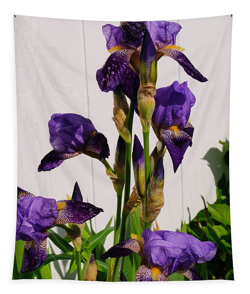Purple Tapestry featuring the photograph Purple Iris Stalk by Tikvah's Hope
