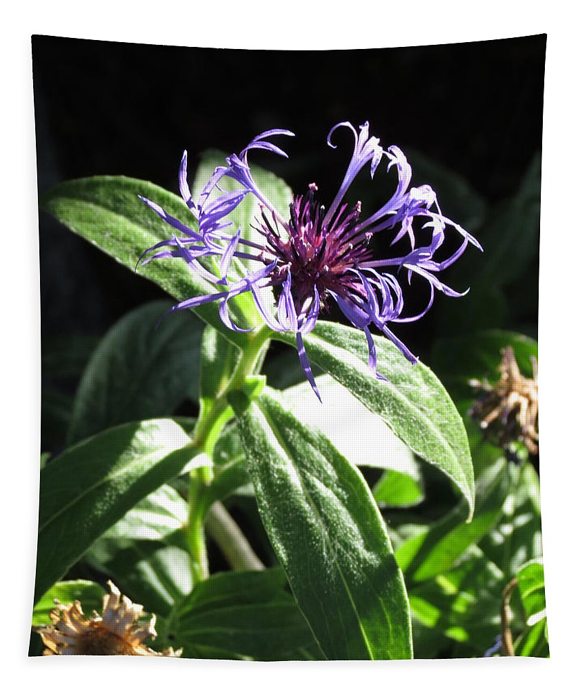 Purple Flower Tapestry featuring the photograph Purple Wildflower by Laurel Powell